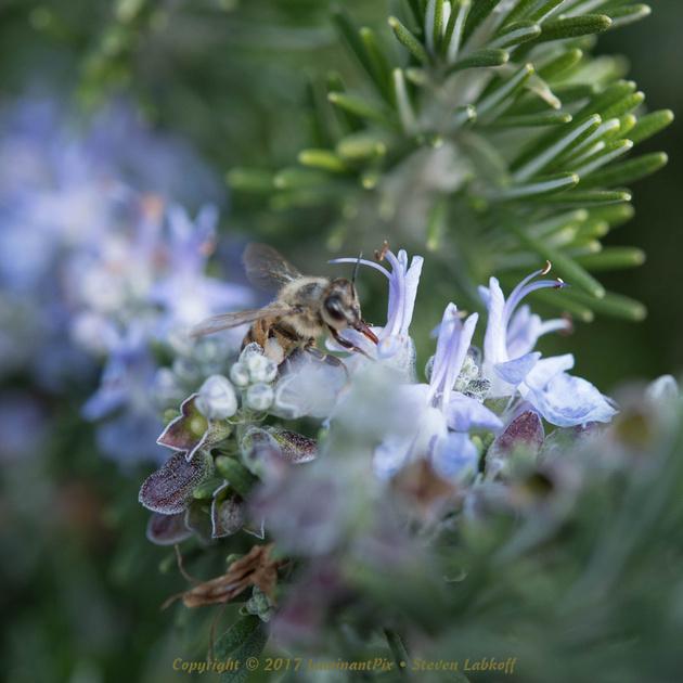 Honey: In the Beginning